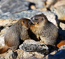 Marmot Babies Keeping Secrets by William C. Gladish