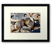 Marmot Babies Keeping Secrets Framed Print