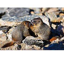 Marmot Babies Keeping Secrets Photographic Print