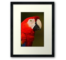 Scarlet Macaw Portrait Framed Print