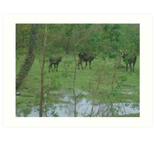 Calves After A Rainy Night Art Print