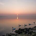 Five Swans at Dawn by Martina Fagan