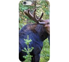 Bullwinkle iPhone Case/Skin