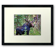 Bullwinkle Framed Print