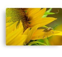 Sunflower and the Insect Canvas Print