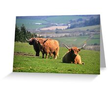 Long Horned Cattle in Cornwall Greeting Card