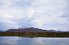 Gathering of Cattle Egrets - Reflected - Wide Angle by RatManDude