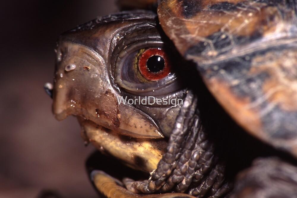 Turtle Portrait by William C. Gladish, World Design