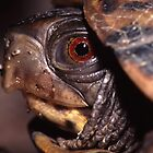 Turtle Portrait by William C. Gladish