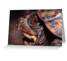 Turtle Portrait Greeting Card
