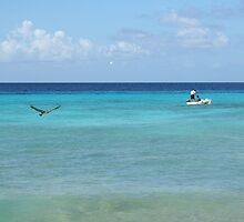 Aruba, Pelican fishing by Linda Jackson