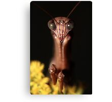 Praying Mantis Portrait Canvas Print