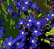 Ground Cover Violets by Sarah Niebank