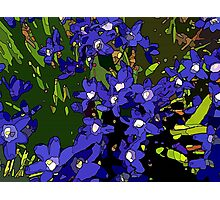 Ground Cover Violets Photographic Print
