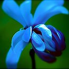 Azure Alure  by Tina Longwell