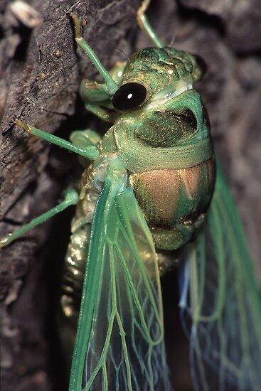 Cicada of Emerald & Gold by William C. Gladish