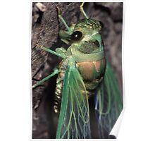 Cicada of Emerald & Gold Poster