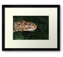 Water Snake Framed Print