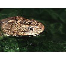 Water Snake Photographic Print