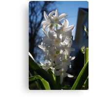in your front yard Canvas Print