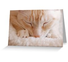 Making Biscuits Greeting Card