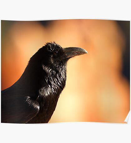 Raven Portrait at Sunset Poster
