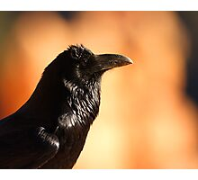 Raven Portrait at Sunset Photographic Print