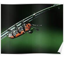 Milkweed Beetle & Dew Drop Poster