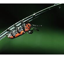 Milkweed Beetle & Dew Drop Photographic Print
