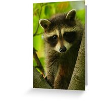 Young Raccoon at Home Greeting Card