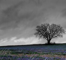 Sole Tree by Mark Polege
