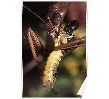 Praying Mantis vs. Grasshopper Poster