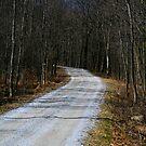 Fairfield Country Road by Deborah  Benoit