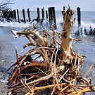 Tangled Weave by Debbie Stobbart