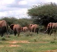 ELEPHANT WALK TSAVO NATIONAL PARK KENYA by JAYMILO