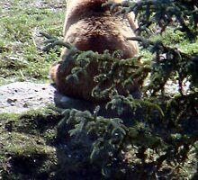 Bear Back by tkrosevear