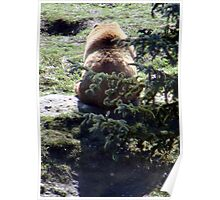 Bear Back Poster