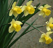 Shouting spring by Carol Smith