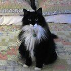 Cheyenne Marie my Boo Boo Kitty by janetmarston
