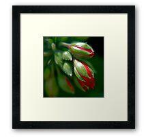 Geranium Buds Framed Print