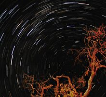 Star Trails ~ HDR by Pene Stevens