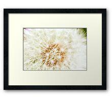 Elegant White Dandelion Florets  Framed Print