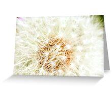 Elegant White Dandelion Florets  Greeting Card