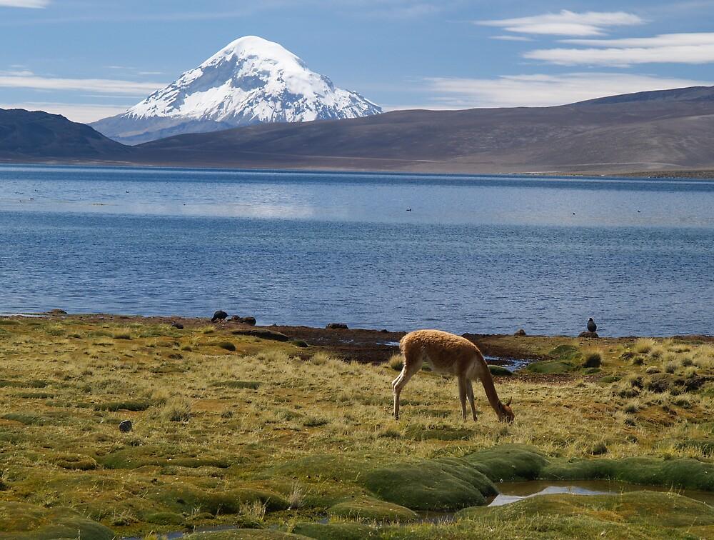 Volcán Pomerape - Chile by Lisa Germany