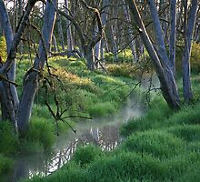 Snags in Wetlands by Randy Richards