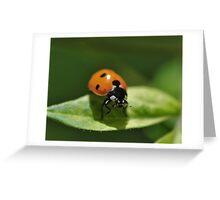 "A ""Lady(Bug)"" is in the house. Greeting Card"
