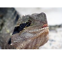 Dragon.. Photographic Print
