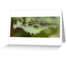 Insect Runway Greeting Card