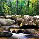 Forest Creek by Steven  Siow