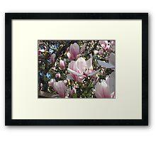 Magnolias, Magnolias! Framed Print